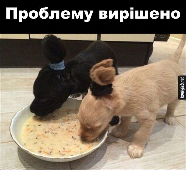 Лайфхак Годування щенят. Щоб щенята під час їдіння рідкої їжі не намочили вуха, їх звязали резинкою