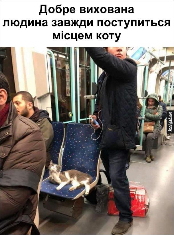 Кіт в транспорті. Добре вихована людина завжди поступиться місцем коту. В громадському транспорті на сидінні лежить кіт, а поряд стоїть чоловік