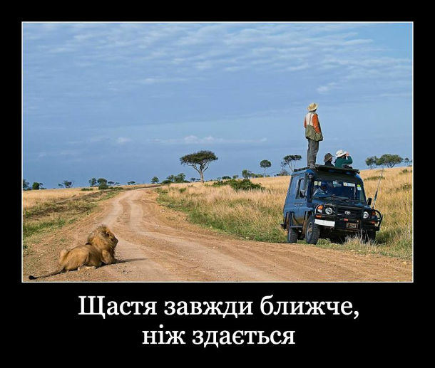 Демотиватор, прикол про сафарі. Щастя завжди ближче, ніж здається. На сафарі туристи хочуть подивитися на лева, повилазили на джип і оглядають савану. А лев сидить позаду них, в кількох метрах від машини