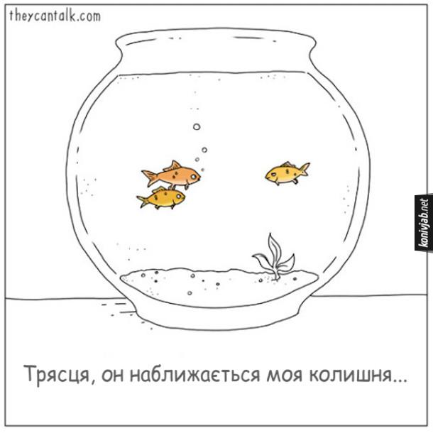 Жарт про акваріумних рибок. В акваріумі всього три рибки. Пара рибок пливе поряд, а назустріч їм пливе третя. - Трясця, он наближається моя колишня...