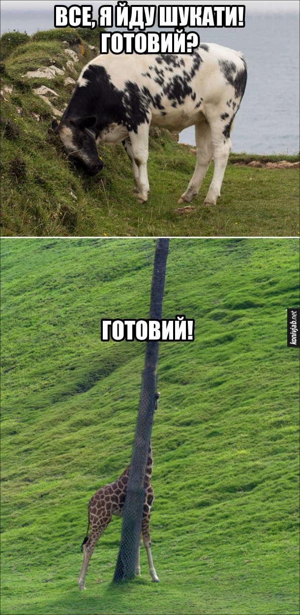 Тварини грають в хованки. Корова: - Все, я йду шукати! Готовий? Жирафа, сховавшись за деревом: - Готовий!