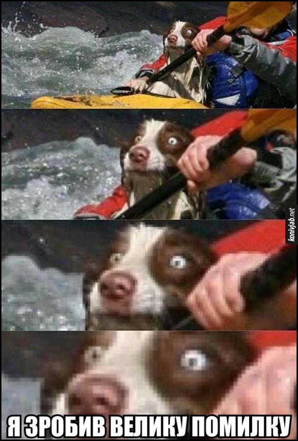 Прикол Собака на човні на гірській річці пливе з господарем, з жахом дивиться вперед і думає: - Я зробив велику помилку