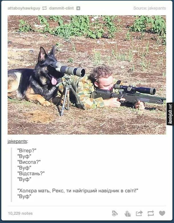 """Жарт про собаку в армії. Снайпер цілиться, біля нього сидить собака і дивиться в підзорну трубу. """"Вітер?"""" """"Вуф"""" """"Висота?"""" """"Вуф"""" """"Відстань?"""" """"Вуф""""  """"Холєра мать, Рекс, ти найгірший навідник в світі!"""" """"Вуф"""""""