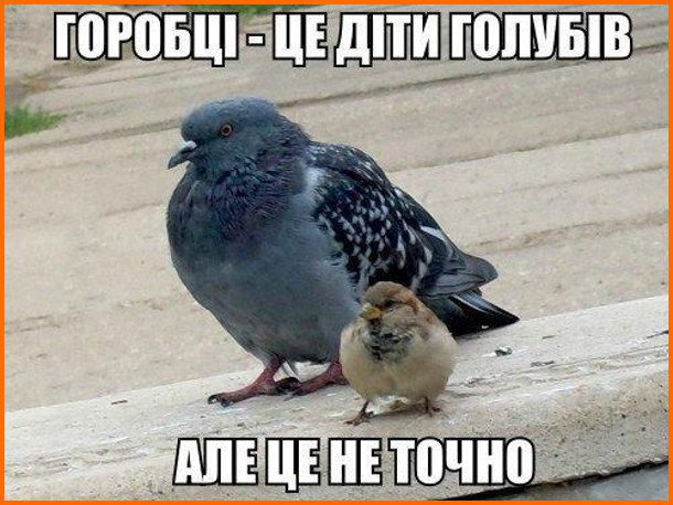 Жарт про горобців. Горобці - це діти голубів. Але це не точно