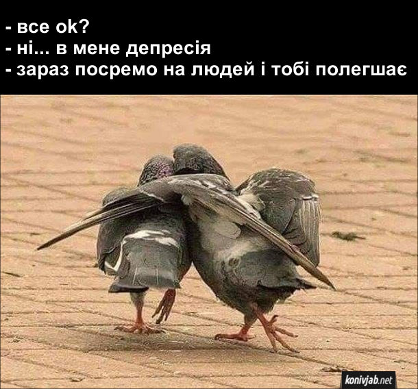 Жарт про двох голубів. - Все ok? - Ні... в мене депресія. - Зараз посремо на людей і тобі полегшає