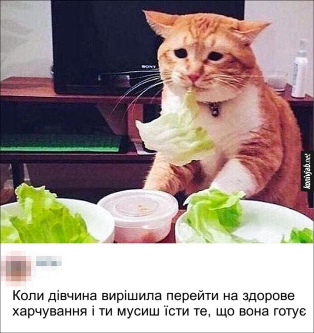 Прикол про здорове харчування. Коли дівчина вирішила перейти на здорове харчування і ти мусиш їсти те, що вона готує. Кіт з огидою їсть листок салату