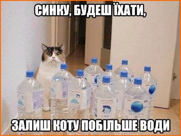 Прикол. Вода для кота. Мама: - Синку, будеш іхати, залиш коту побільше води. Син залишив пластикові пляшки з водою. Кіт стоїть і не знає, що з ними робити