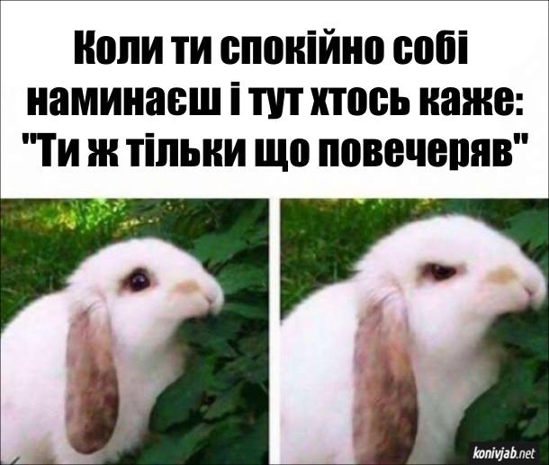 """Кролик Прикол. Коли ти спокійно собі  наминаєш і тут хтось каже: """"Ти ж тільки що повечеряв"""". На одному фото кролик їсть листя з милим виразом обличчя. На іншому фото - їсть зі злим виразом обличчя"""