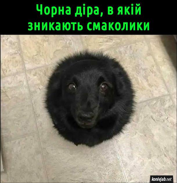 Смішне фото собаки. Чорного песика знято згори і схоже, ніби це велика кругла чорна точка. Чорна діра, в якій зникають смаколики