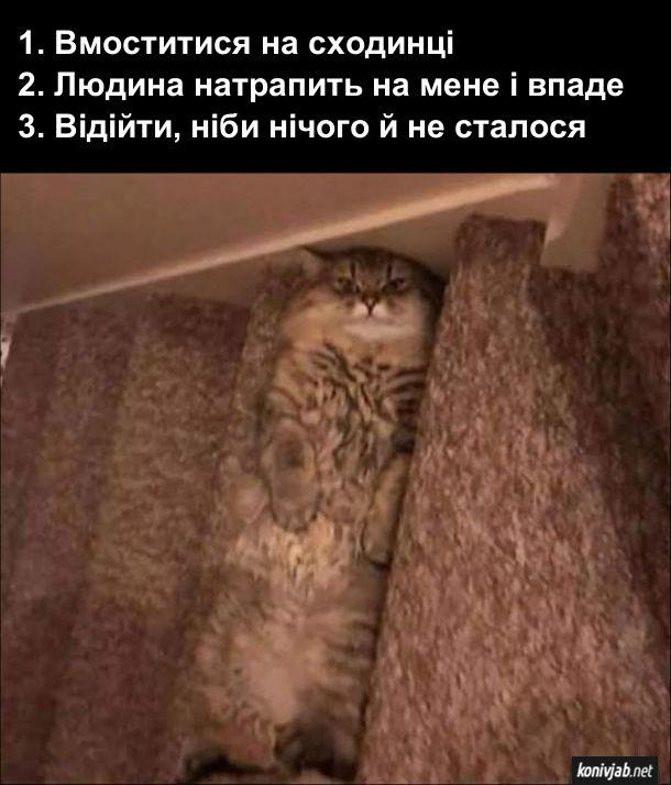 Прикол. Кіт лягає на сходах. В нього такий план: 1. Вмоститися на сходинці; 2. Людина натрапить на мене і впаде; 3. Відійти, ніби нічого й не сталося