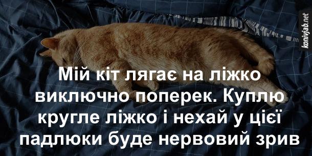 Анекдот Кіт на ліжку. Мій кіт лягає на ліжко виключно поперек. Куплю кругле ліжко і нехай у цієї падлюки буде нервовий зрив