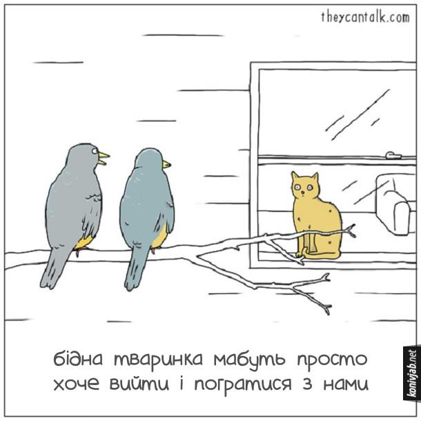 Смішний малюнок: Кіт і пташки. Дві пташки силять на гілці біля вікна будинку, а за вікном сидить кіт і уважно на них дивиться. Одна пташка каже іншій: - Бідна тваринка мабуть просто хоче вийти і погратися з нами