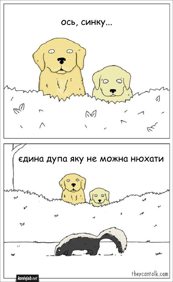 Смішний малюнок про скунса. Батько-пес показує своєму синові скунса і каже: - Ось, синку, єдина дупа, яку не можна нюхати