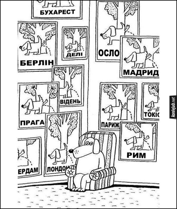 Смішний малюнок про собаку. Пес сидить в кріслі, а на стінах висять фотографії де він сцить на дерева в різних містах: Бухарест, Берлін, Делі, Осло, Мадрид, Прага, Відень, Париж, Токіо, Рим, Амстердам, Лондон