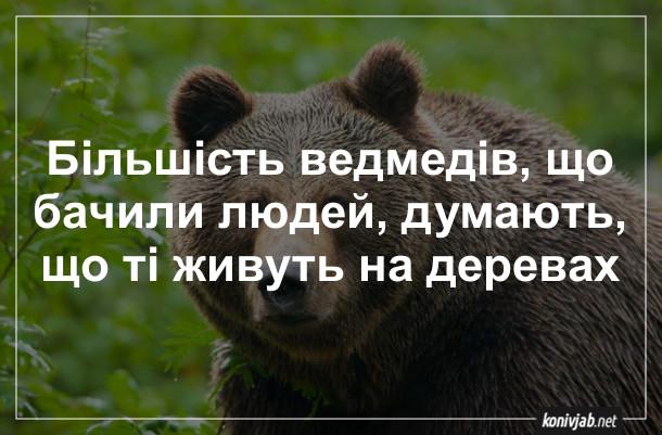 Анекдот про ведмедів. Більшість ведмедів, що бачили людей, думають, що ті живуть на деревах (бо люди, коли бачать ведмедів, зазвичай вилазять на дерево)
