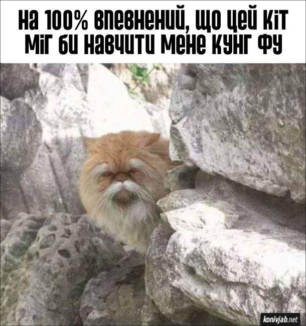 Кіт з бровами і вусами, схожий на мудрого вчителя шаолінь. На 100% впевнений, що цей кіт міг би навчити мене кунг фу