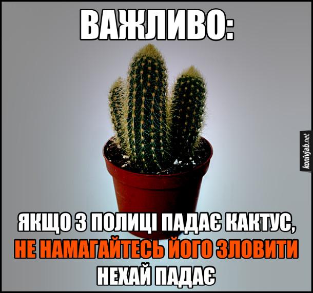 Прикол про кактус. Важливо: Якщо з полиці падає кактус, не намагайтесь його зловити. Нехай падає