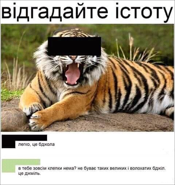 """Фото тигра із замальованим обличчям. Підпис: """"Відгадайте істоту"""" Коменти: """"Легко, це бджола"""", """"В тебе зовсім клепки нема? Гн буває таких великих і волохатих бджіл. Це Джміль"""""""