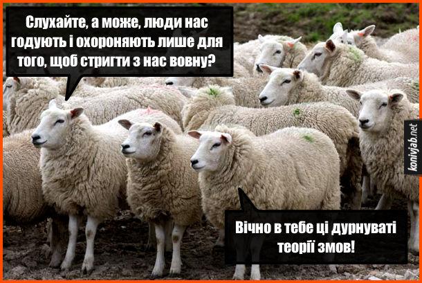 Прикол про овець. Одна вівця: - Слухайте, а може, люди нас годують і охороняють лише для того, щоб стригти з нас вовну? Інша вівця: - Вічно в тебе ці дурнуваті теорії змов!