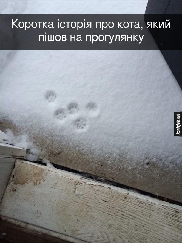 Прикол Кіт вийшов на прогулянку. Коротка історія про кота, який пішов на прогулянку. Котячі сліди на снігу. Тобто кіт вийшов на сніг і одразу забіг до хати