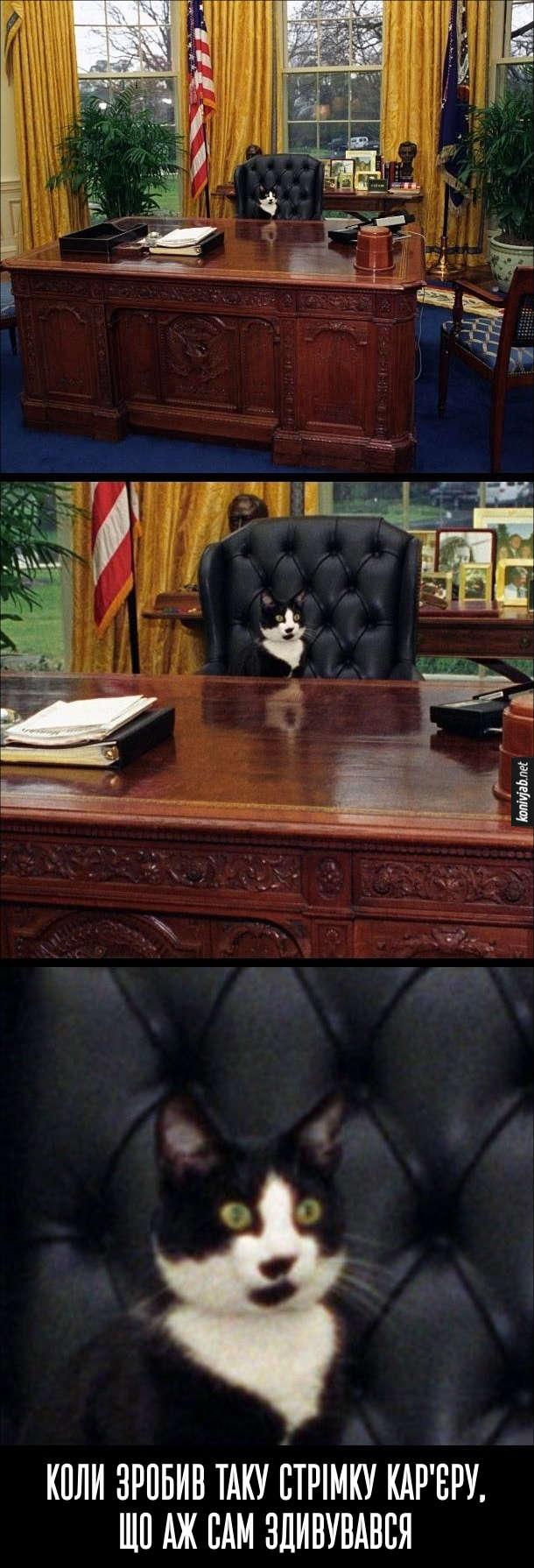 Прикол. Кіт в кріслі президента США. Коли зробив таку стрімку кар'єру, що аж сам здивувався