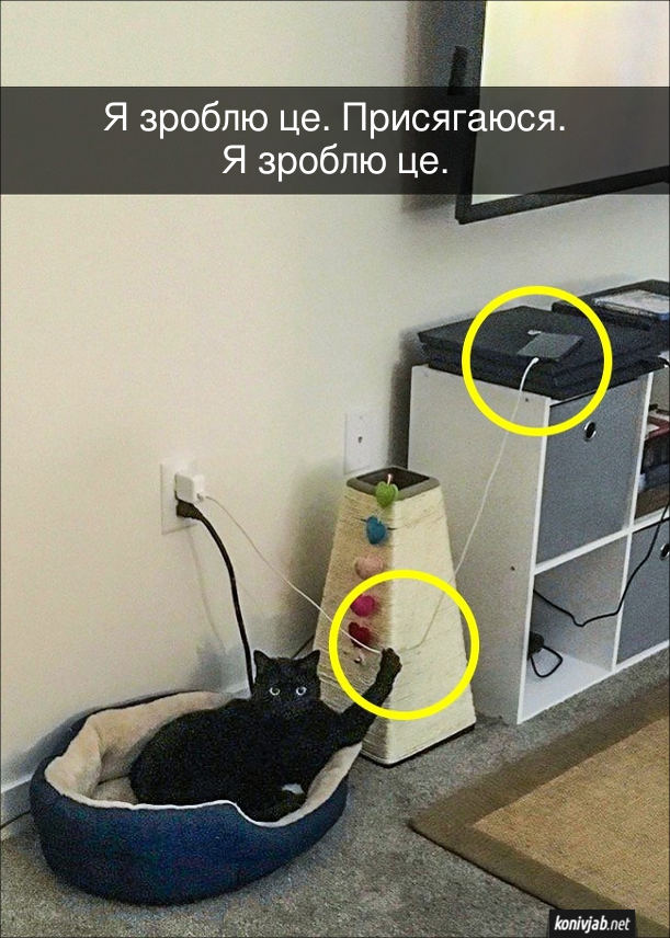 Шантаж від кота. Кіт тримає кігтем провід від телефона, який заряджається, з наміром смикнути і впустити телефона на підлогу. Кіт каже: - Я зроблю це. Присягаюся. Я зроблю це.
