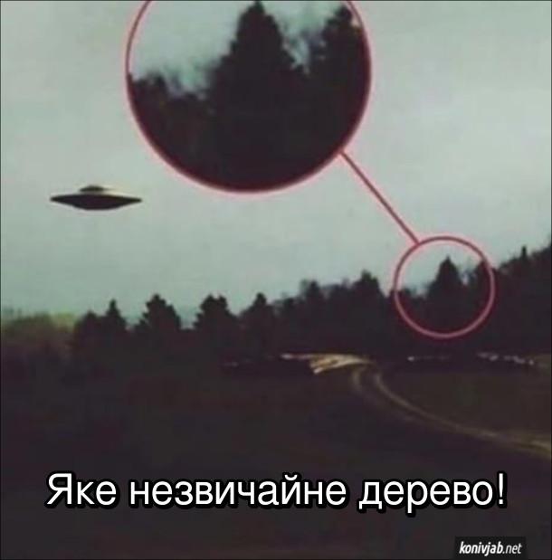 Жарт про НЛО. Фото з літаючою тарілкою, але на фото виділено не НЛО, а верхів'я якогось дерева. Яке незвичайне дерево!