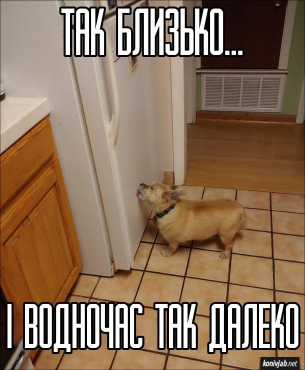 Пес і холодильник. Пес облизує дверцята холодильника. Так близько.. і водночас так далеко (їжа)