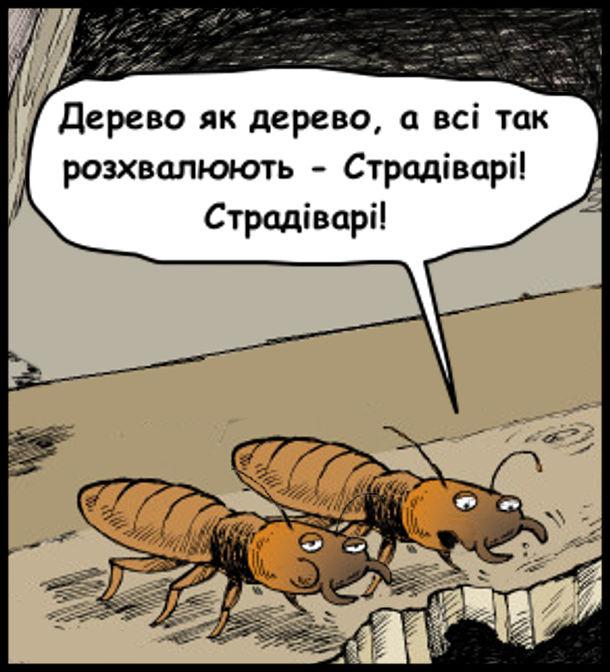 Прикол, смішний малюнок про термітів. Двоє термітів гризуть деревину. Один каже: - Дерево як дерево, а всі так розхвалюють - Страдіварі! Страдіварі!