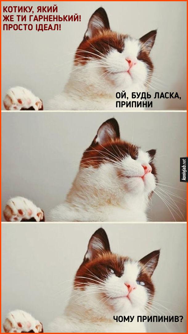 Прикол Коли кота хвалять. До кота кажуть: - Котику, який же ти гарненький! Просто ідеал! Кіт: - Ой, будь ласка, припини... Чому припинив?