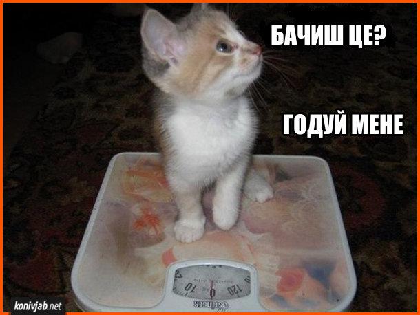 Кошеня на вагах: - Бачиш це? Годуй мене