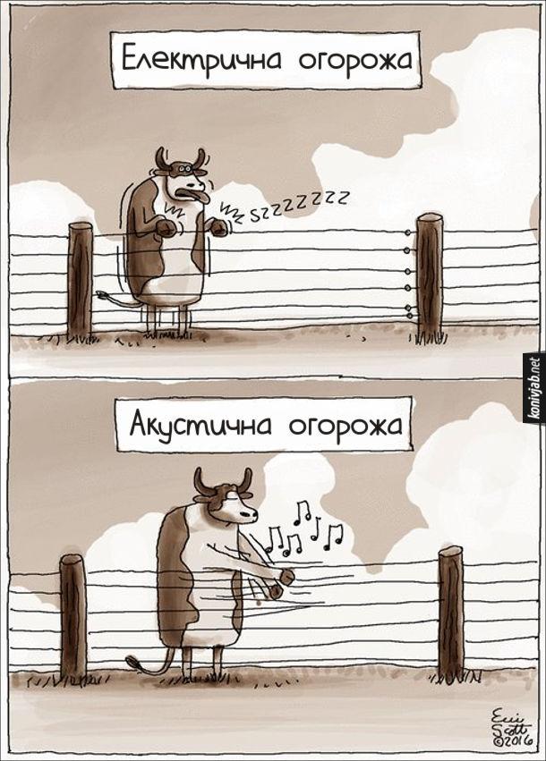 Смішний малюнок Огорожа на пасовищі. Електрична огорожа - бик тримає ться за нього і трясеться. Акустична огорожа - бик грає на дротах огорожі, як на струнах акустичної гітари