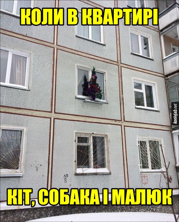 Як зробити щоб не звалили ялинку. Коли в квартирі кіт, собака і малюк, ялинку поставили на підвіконні за вікном
