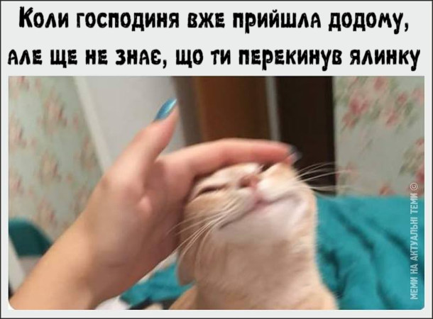 Прикол. Господиня гладить кота. Коли господиня вже прийшла додому, але ще не знає, що ти перекинув ялинку