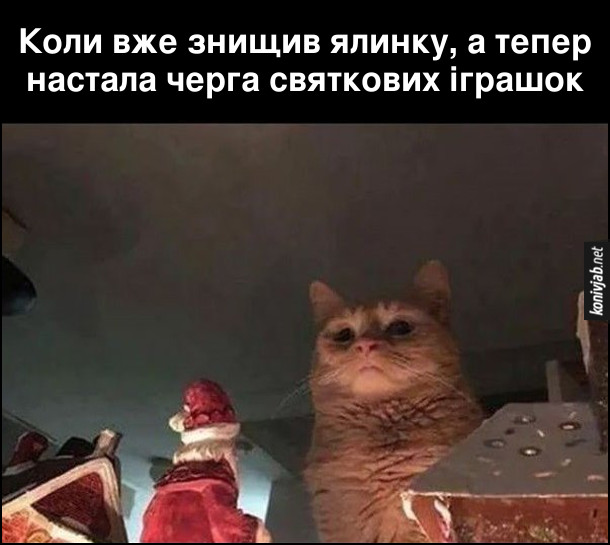 Мем про кота і ялинку