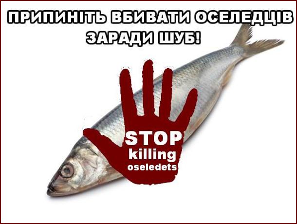 Жарт про оселедець під шубою. Припиніть вбивати оселедців заради шуб! Stop killing oseledets