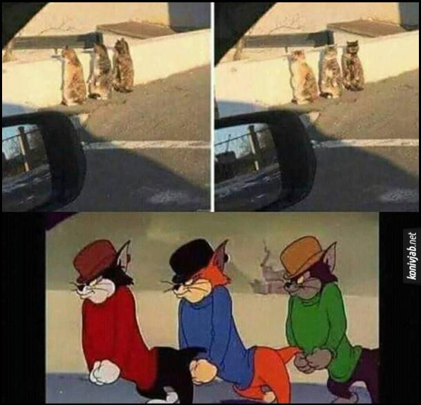 """Прикол. Три коти  стоять на задніх лапах. Схожі на трьох котів-бандитів з мультфільму """"Том і Джері"""""""