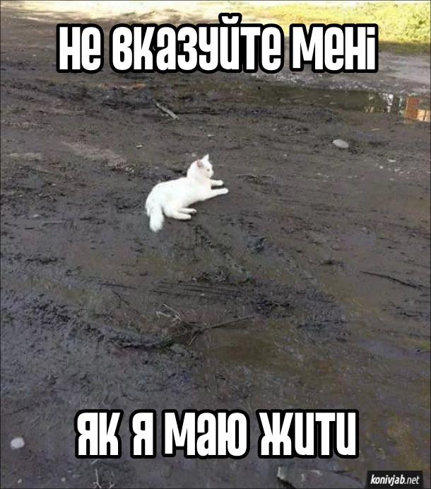 Прикол Білий кіт. Білий кіт лежить в калюжі і багнюці. Не вказуйте мені, як я маю жити
