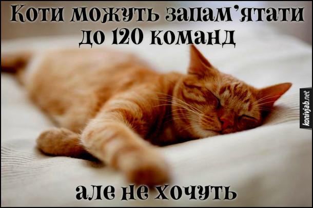 Анекдот Команди для котів. Коти можуть запам'ятати до 120 команд. Але не хочуть