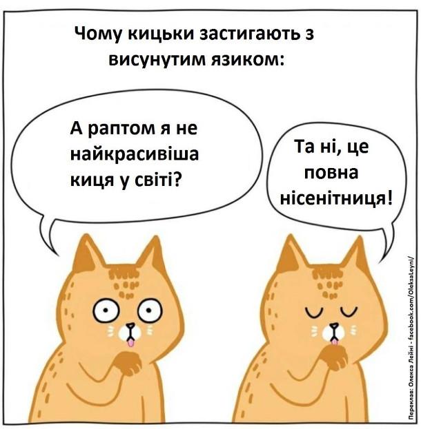 Жарт про кицьку. Чому кицьки застигають з висунутим язиком. Кішка облизується, а потім завмерла і подумала: - А раптом я не найкрасивіша киця у світі? Та ні, це повна нісенітниця! (і продовжила облизуватися)