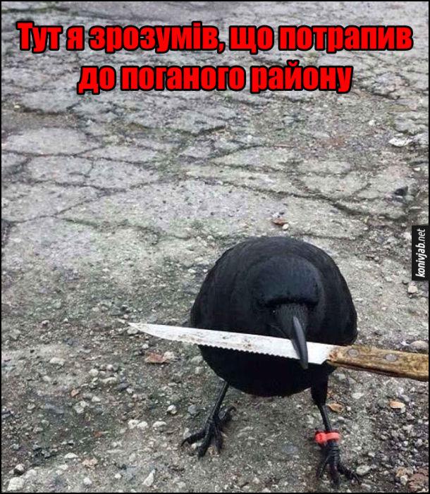Смішне фото: ворона з ножем в клюві. Тут я зрозумів, що потрапив до поганого району
