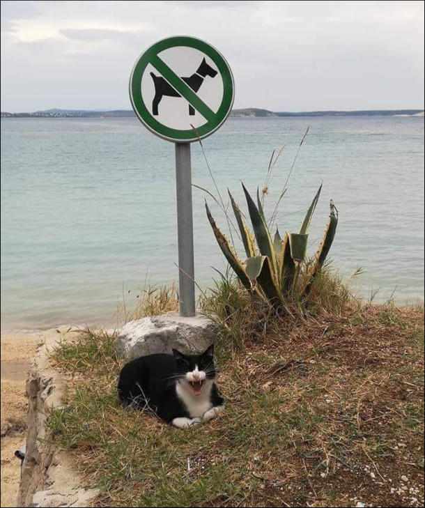 Прикол На пляжі знак Без собак. Під ним сидить кіт і роззявив рота, ніби регоче