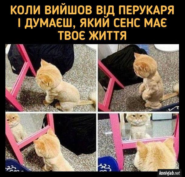 Прикол Кіт після перукарні сумно дивиться в дзеркало. Коли вийшов від перукаря і думаєш який сенс має твоє життя
