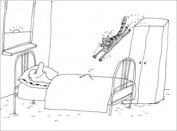 Прикол Ранкова ерекція. Кіт цибає з шафи прямо на пах