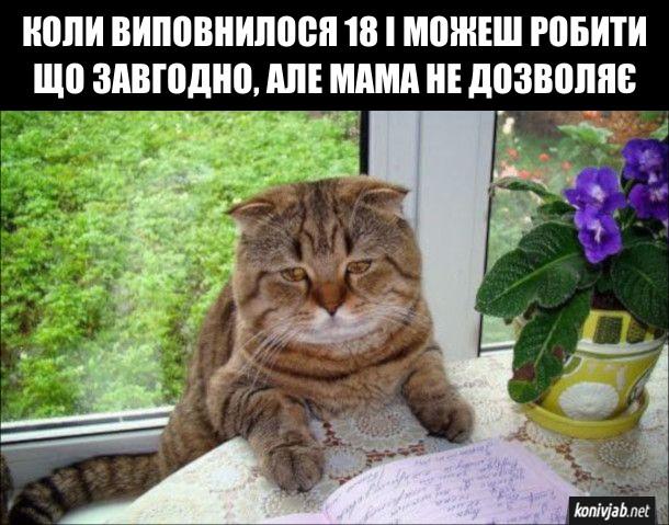 Мем про повноліття. Коли виповнилося 18 і можкш робити що завгодно, але мама не дозволяє. На фото: сумний котик