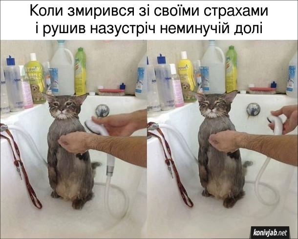 Мем Кіт під душем. Коли змирився зі своїми страхами і рушив назустріч неминучій долі
