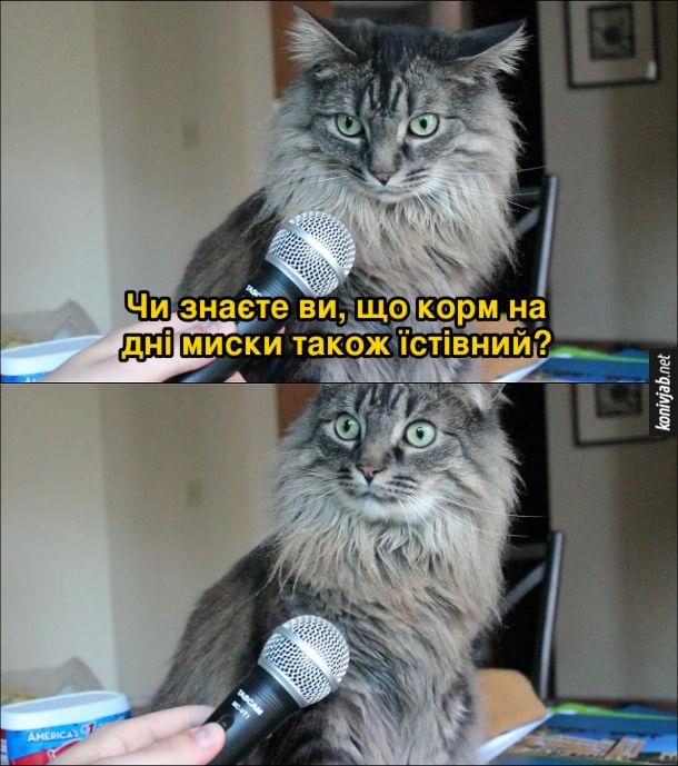 Мем Інтерв'ю в кота. Кота питають: - Чи знаєте ви, що корм на дні миски також їстівний? Кіт шокований