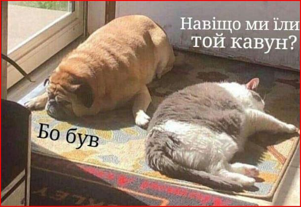 Прикол Коли наївся кавуна. Лежить гладкий собака і гладкий кіт. - Навіщо ми їли той кавун? - Бо був