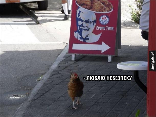 Прикол Курка ходить поблизу ресторану KFC. Каже: - Люблю небезпеку