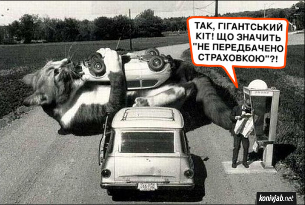 """Смішна картинка з котом. На автомобіль напав велетенький кіт, перекинув її і грається. Господар машини телефонує в страхову службу: - Так, гігантський кіт! Що значить """"не передбачено страховкою""""?!"""